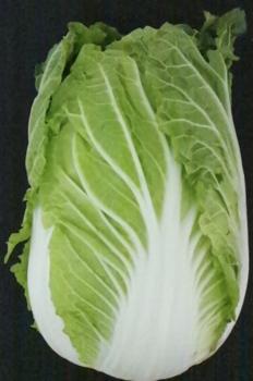 白菜2.png