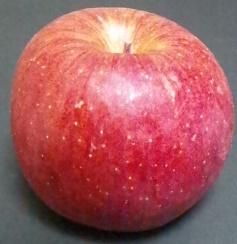 りんご一個.png